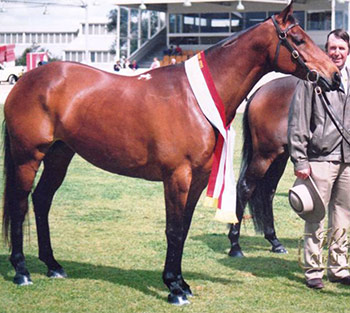 Hazelwood Romance (Dam of Hazelwood Conman)