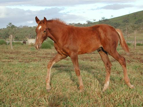 Nonda Redford as a foal