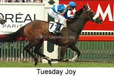Tuesday Joy
